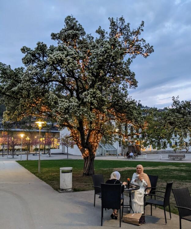 Midt i Sogndal står eit vakkert, gammalt pæretre. Det høyrer til bergamott-pærene, som vi sporar vi heilt tilbake til Lille-Asia og romersk tid. Dette ikoniske blikkfanget er det mest fotograferte treet i sentrum. Det tener også som ei staseleg påminning om identiteten til saftbygda Sogndal. Sist, men ikkje minst, er blomstrar, frukt, grov bark og daud ved på treet viktige ressursar for alskens småkryp som også bur i sentrum: bier, maur, spretthalar og nettvinger. Foto: Kyrre Groven.