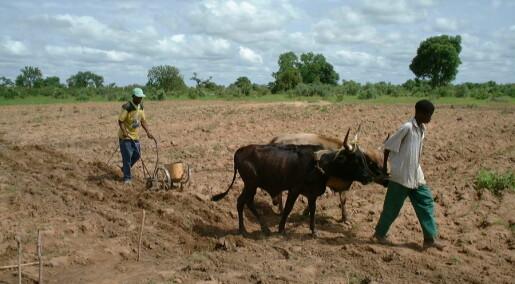 Norsk forskning øker avlinger i Mali