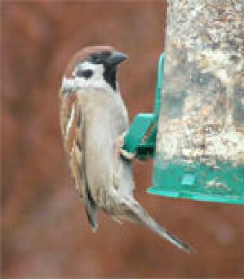"""""""En fuglemater holder fôret rent"""""""