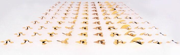 Et utvalg forskjellige frø-design som forskerne har testet ut.