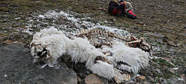 Rotten carcasses might be macabre, but they are great for biodiversity