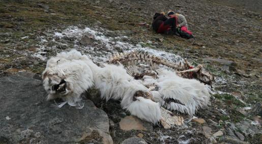 – Døde dyr bør få ligge i fred i naturen