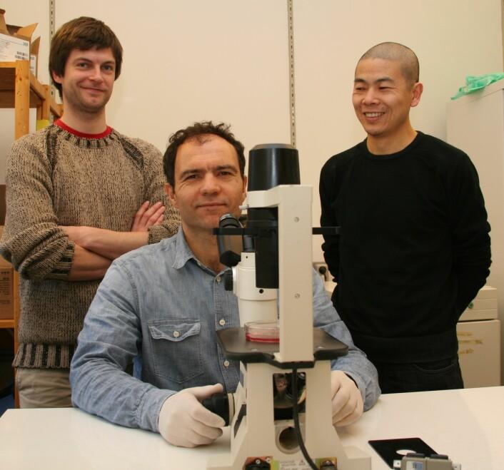 Torstein Lindstad (f.v.), Fahri Saatcioglu og Yang Jin forsker på prostatakreft. (Foto: Elin Fugelsnes)