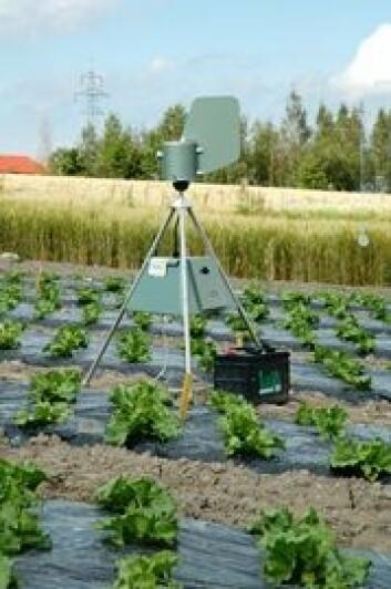 Disse sporefellene kan bidra til at bøndene tidligere blir varslet om angrep av agurkbladskimmel. Foto: Berit Nordskog, Bioforsk