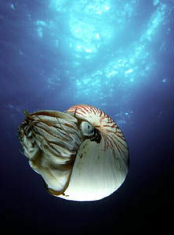 """""""Nautilus har overlevd siden tidenes morgen - mot alle odds."""""""