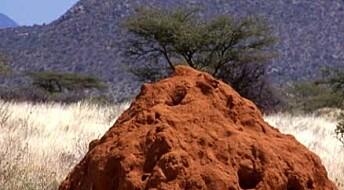 Namibiske jordsirkler fremdeles et mysterium