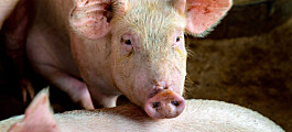 Fortsatt lav forekomst av antibiotikaresistens hos mennesker og dyr i Norge