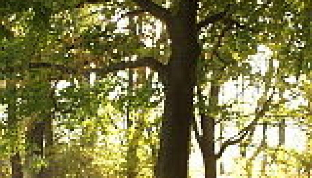 Brått værskifte kan true skogen
