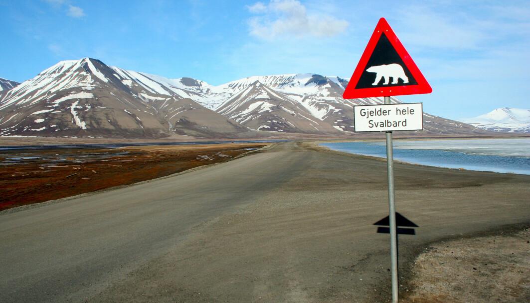 Det er flere isbjørner enn mennesker på Svalbard. Likevel er Svalbard veldig viktig for Norge.