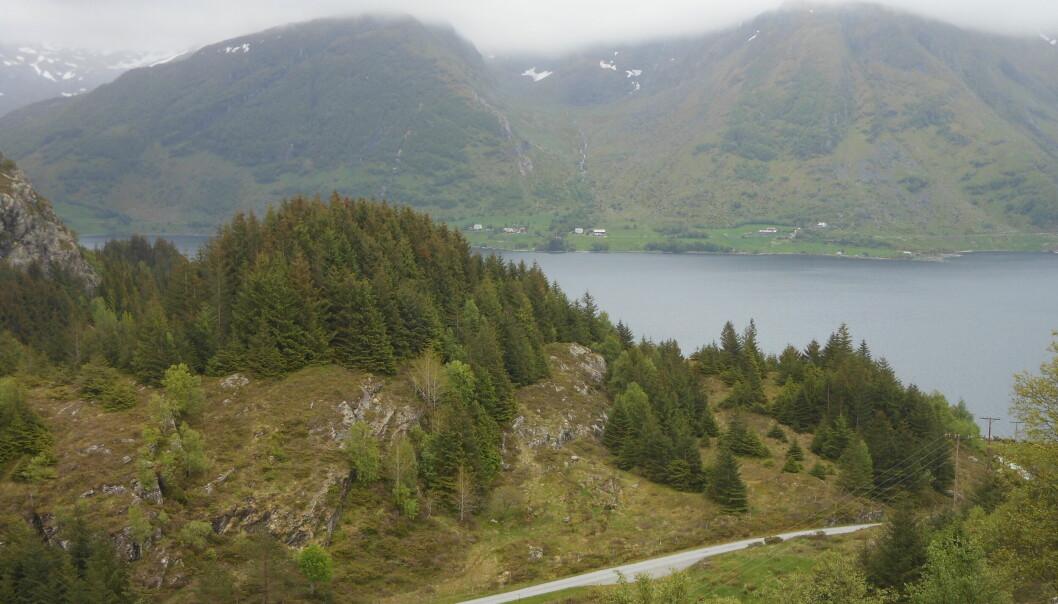 Figur 1 Et granfelt langs Stongfjorden.