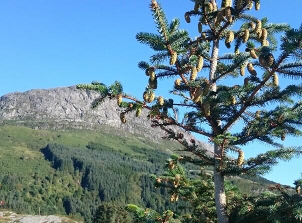 Plantet skog på reisefot