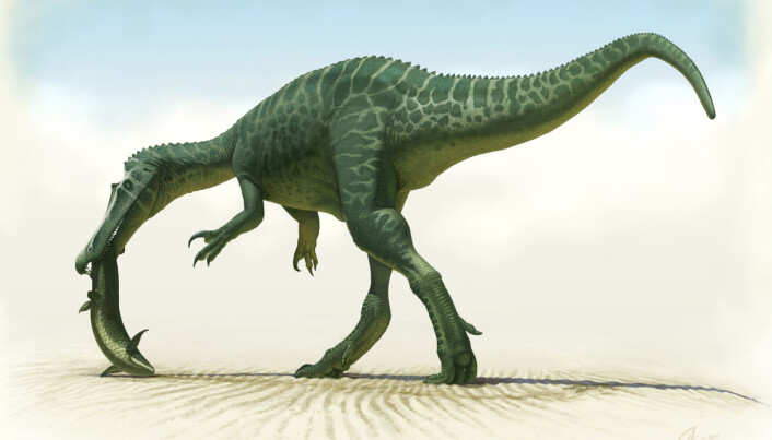 Baryonyx hadde massevis av tenner, og en lang, smal kjeft.