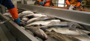 2008 var ille for mange i hvitfiskindustrien, og 2009 kan bli langt verre. (Foto: Frank Gregersen)