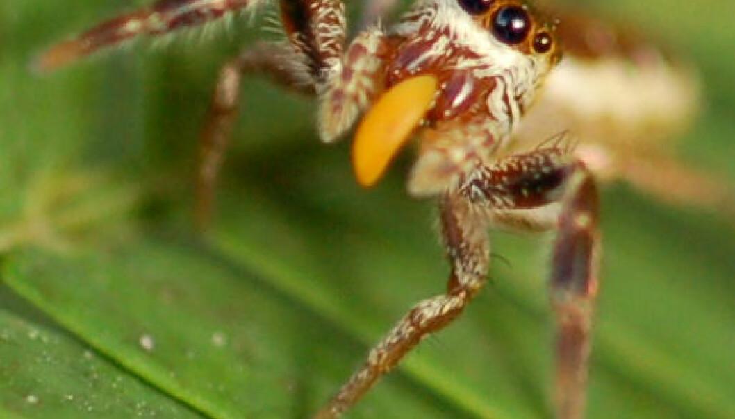 Forbløffende oppdagelse: Edderkopp går vegetarvei
