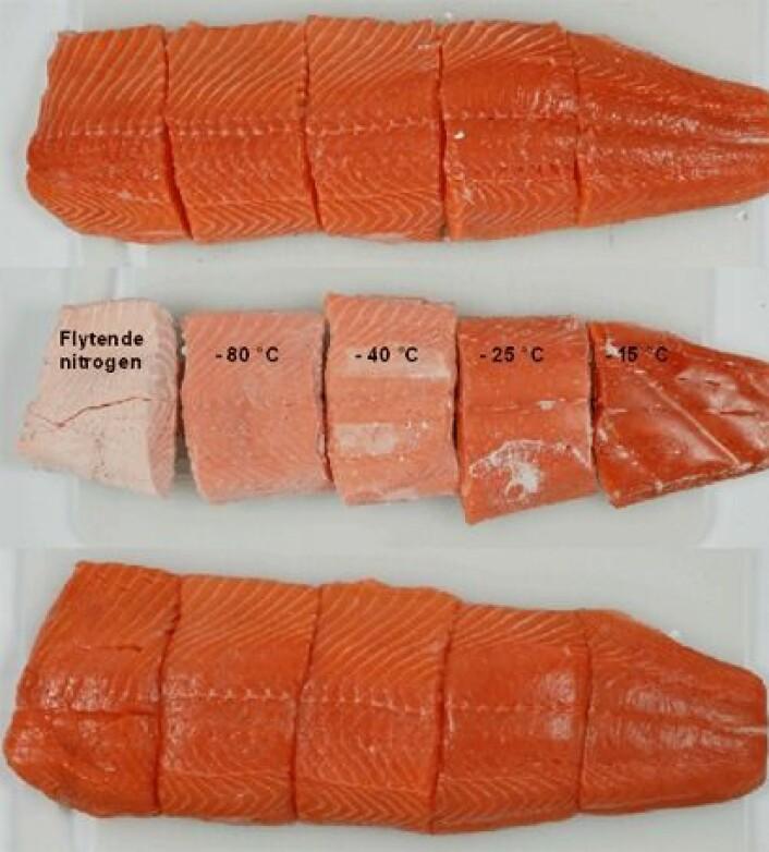 Laksefilet før frysing (øverst), frosset ved ulike temperaturer (midten), og tint (nederst).