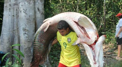 Amazonas: Vern ga økt levestandard for lokalbefolkningen
