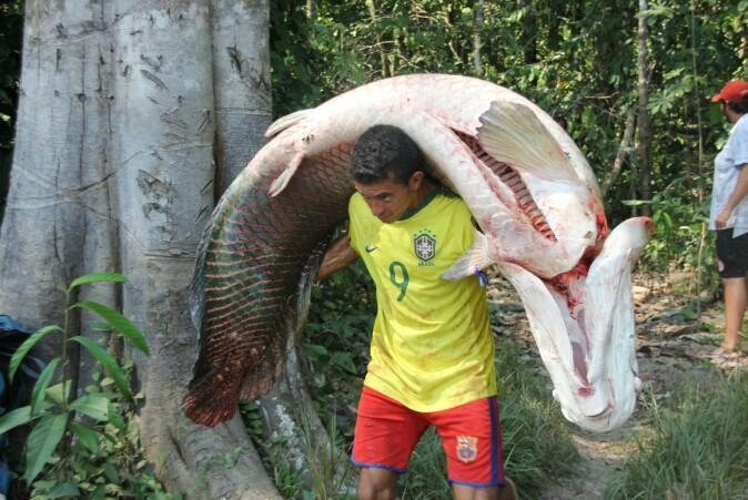 Det er god størrelse på fisken som blir fanget.