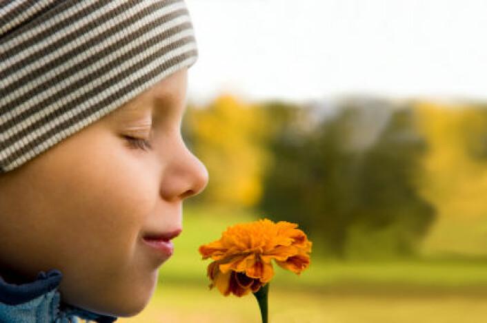 Forskning på hvordan hjernen oppfatter lukt har kommet kortere enn forskning på andre sanser. (Foto: iStockphoto)