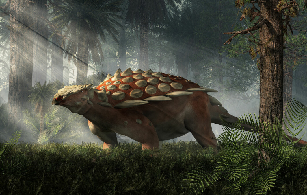 Den pansrede dinosauren, som den også kalles, hadde ganske spesielle pigger. Slik ville den sett ut da den levde på jorda for millioner av år siden.
