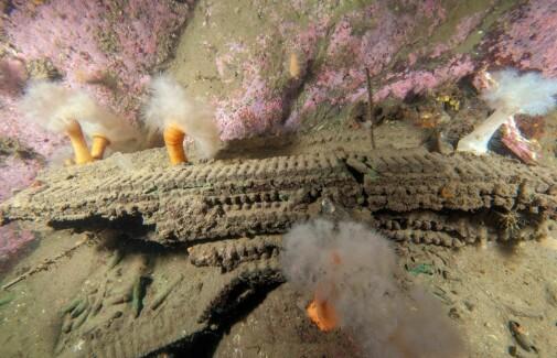 Forskere vil forby fiske ved dumpefelt for eksplosiver