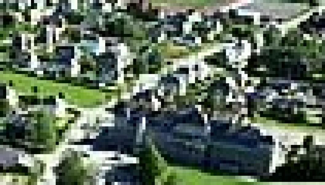 Åbøbyen i Sauda: Nederst i bildet ligger Sauda sykehus, som danner hagebyens grense i nord. Fabrikken, som man skimter øverst til høyre i bildet, danner byanleggets grense i sør. (Foto: Geir Høiland)