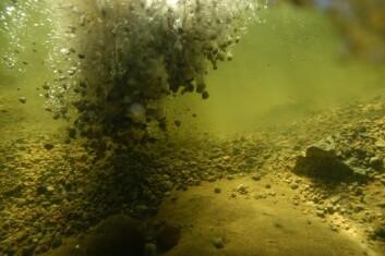 Laksen er kresen på gyteplasser. Her tilføres grus for å lage nye gyteområder. (Foto: Bjørn Barlaup)