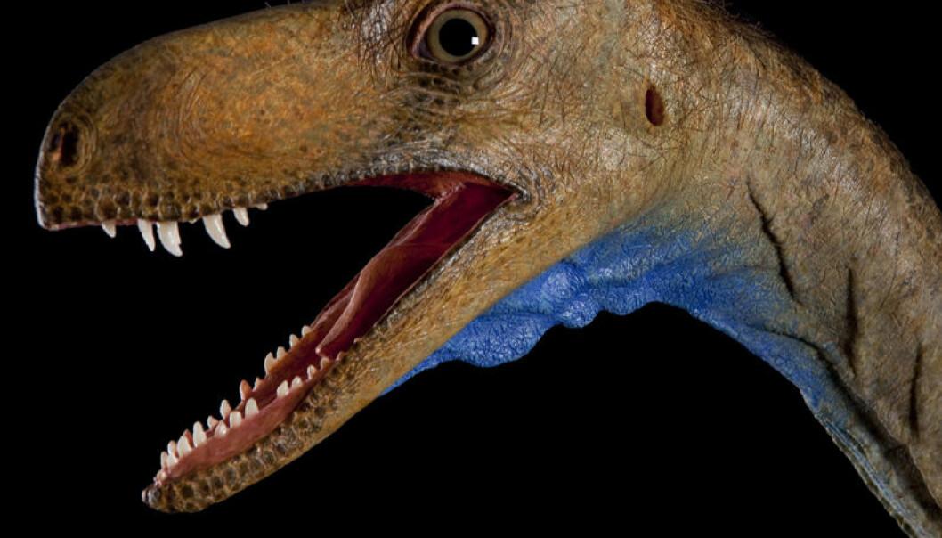 Rekonstruksjon av Eodromaeus, en tidlig kjøttetende dinosaur i gruppen theropoder. De levde for rundt 230 millioner år siden. (Foto: Mike Hettwer)