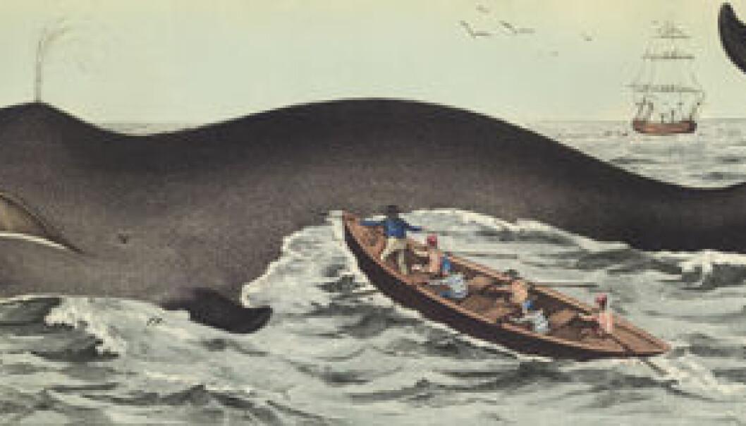 Verdens mest truede hvalbestand ved Svalbard?