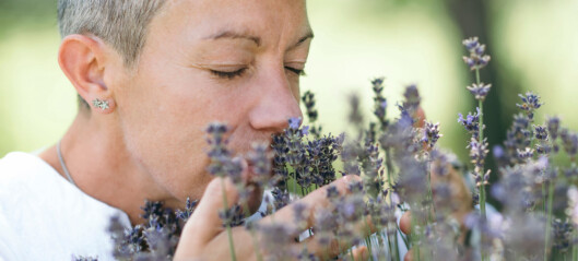 Your sense of smell resembles that of insects