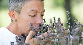 Luktesansen din ligner på insektenes