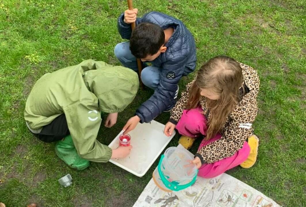 Barn fra Langelinieskolen på Østerbro i København klassifiserer smådyr og insekter som de selv har samlet inn.