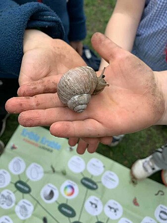 The children at Langelinieskolen classify animals they find in nature.  Here they have found a vine snail.