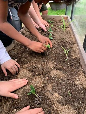 Students from Langelinieskolen sow plants in a bed.