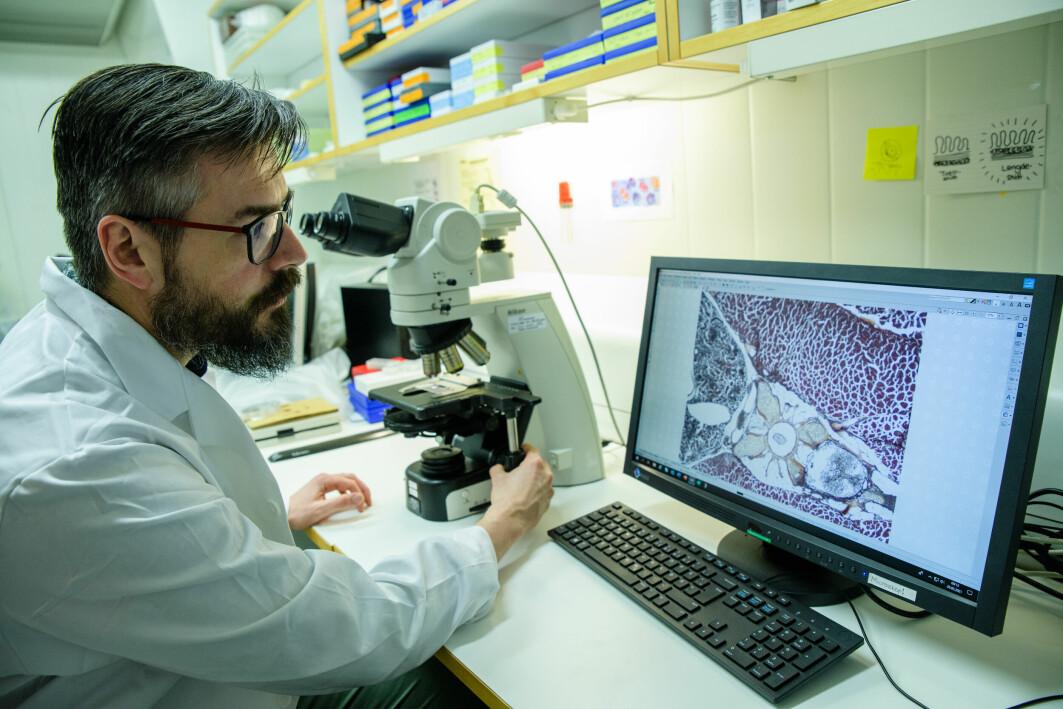 Erik Burgerhout forsker for å forstå hvordan fisk kan tåle mer.