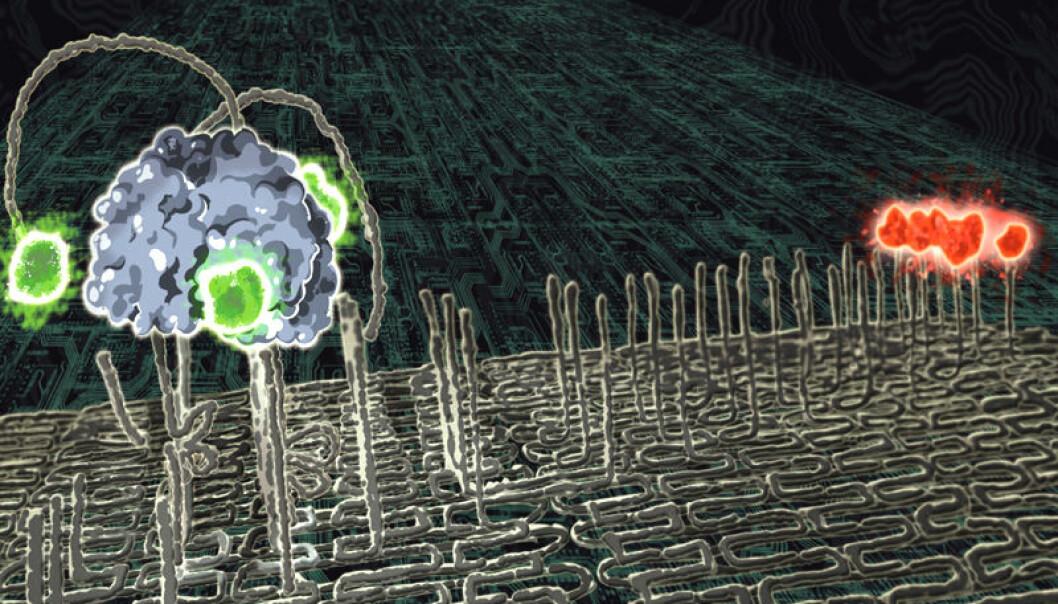 En molekylær nanorobot merket med grønt fargestoff går langs en sti over et DNA-underlag. Den beveger seg mot sitt rødmerkede mål ved å spalte stoffene i stien. Slik oppfører den seg som en selvstyrt, bevegelig robot på molekylskala. (Illustrasjon: Paul Michelotti)