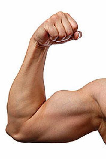 Muskler husker fordums storhet. (Foto: Shutterstock)