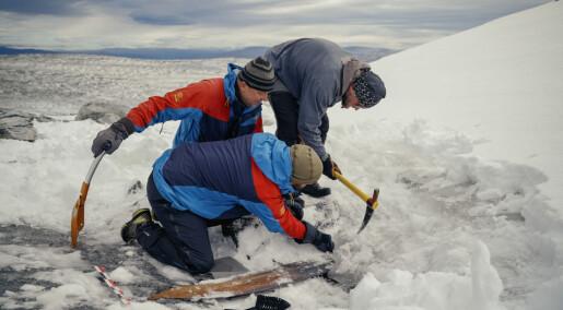Her redder arkeologer en 1300 år gammel ski ut av isen