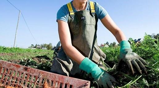 Landbruk fortsatt bærebjelken
