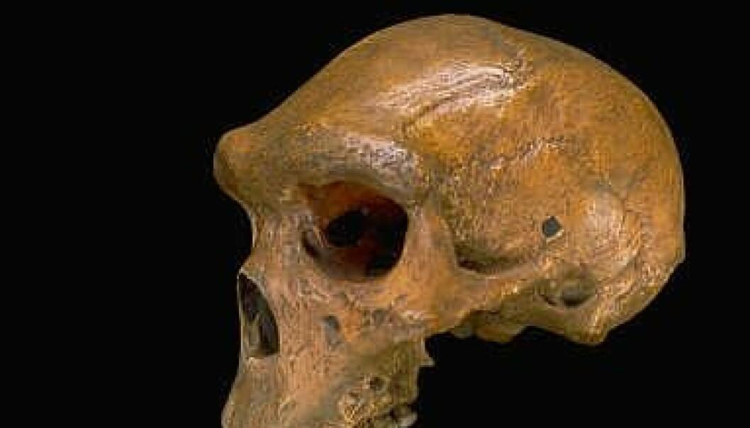 Ny menneskeart funnet