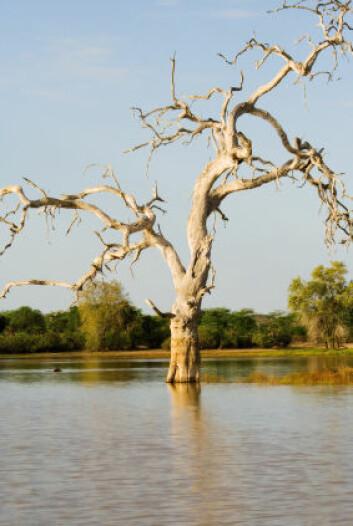 """""""de siste årene har Mosambik vært plaget av kraftig flom og tørke om hverandre. (Illustrasjonsfoto: iStockphoto)"""""""