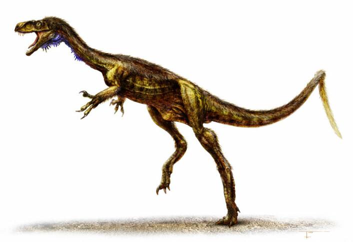 Eodromaeus veide bare rundt 5 - 7 kilo og var 1,2 meter fra snute til haletipp. Den ble funnet i 230 million år gamle berglag ved foten av Andesfjellene. (Illustrasjon: Todd Marshall)