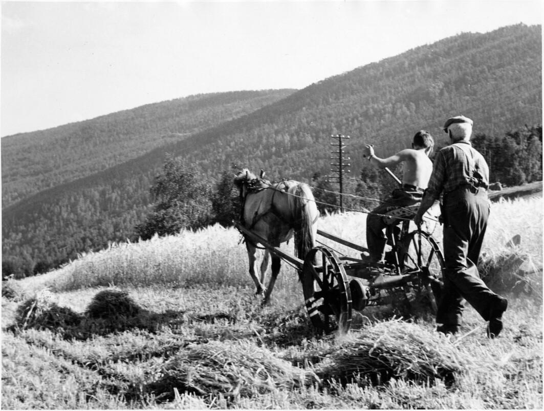 Skuronn i Gudbrandsdalen. Folk skulle klare seg selv, uten hjelp fra det offentlige. Dette var holdningen til mange bønder i Norge som gikk imot offentlige velferdsordninger.