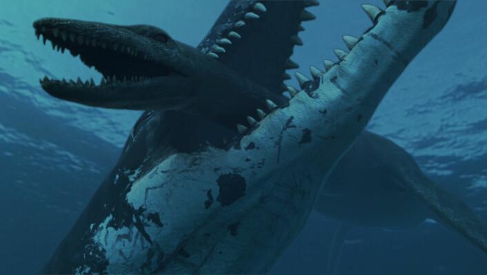 Med et kjevetrykk på 15 000 kg fester en pliosaur grepet på en plesiosaur (Illustrasjon: Atlantic Productions)