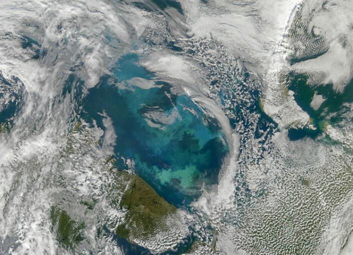 Algeblomstring i Barentshavet. Vi kan se kysten av Kola-halvøya nederst i midtre del av bildet. Den russiske øygruppa Novaja Semlja kan skimtes øverst til høyre og norskekysten til venstre. Bildet er tatt i august 2010 og viser en annen type planktonblomstring enn den som omtales i artikkelen. (Foto: Norman Kuring/NASA Ocean Color Group)