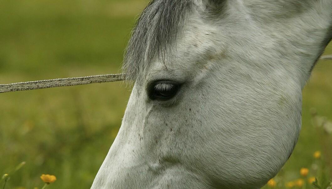 Fakta om flått og lusfluer på hest