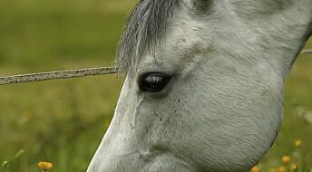 Bakgrunn: Fakta om flått og lusfluer på hest