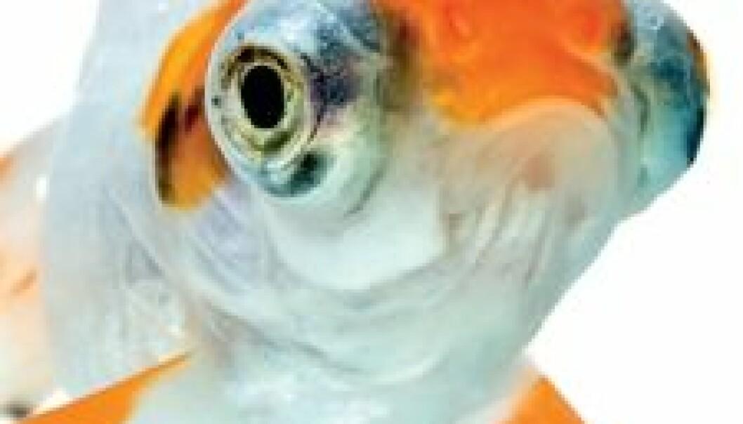 Fiskens frie vilje