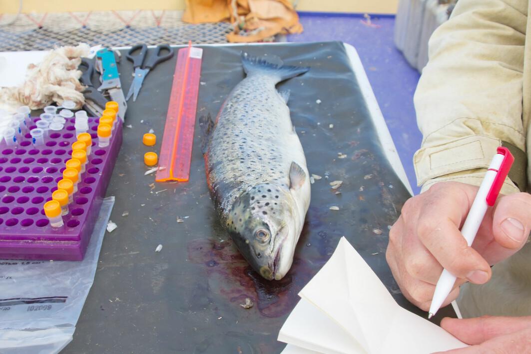 Forskning peker i retning av at fisk både føler smerte og reagerer på stress og uønsket påvirkning i miljøet.