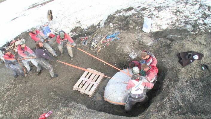 Fossilet blir støpt inn i en kappe av gips før det blir snudd (Foto: Atlantic Productions)