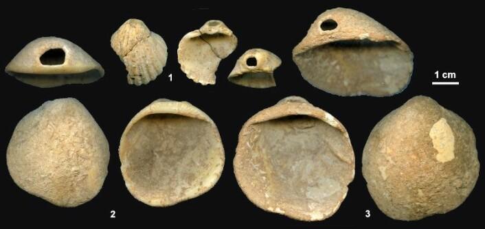"""""""Forskerne tror neandertalere kan ha bruktdisse gjennomhullede skjellenetil pynting - kanskje i rituell sammenheng. (Foto: PNAS)"""""""